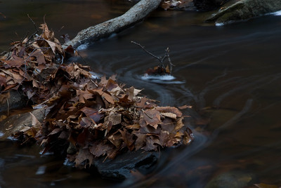 Autumn Leaves in a Stream - 5