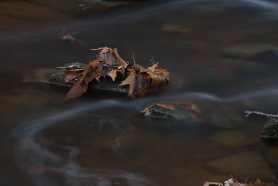 Autumn Leaves in a Stream - 2