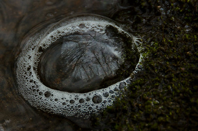 Nature Abstract – Bubble Reflections