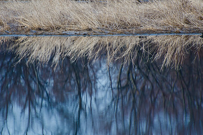 Marsh Grass Reflection