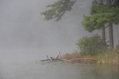 Fog Along The Shore