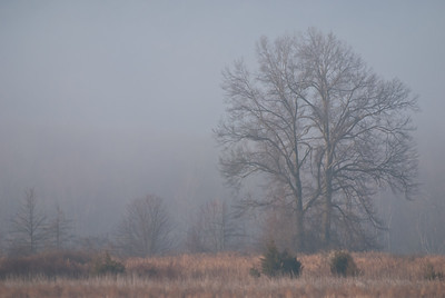 Foggy Morning in the Marsh