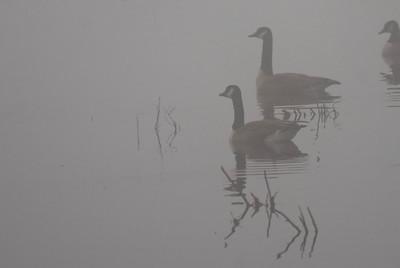 Foggy Morning - 3
