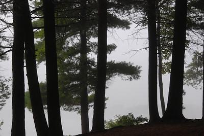 Fog Beyond the Trees