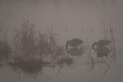 Foggy Morning - 4