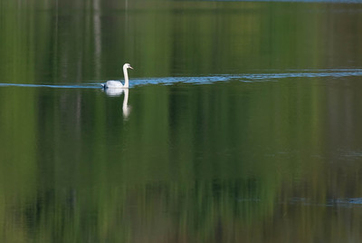 A Spring Swim