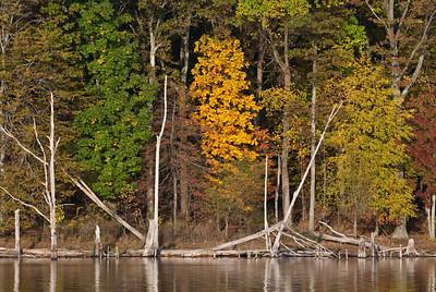 Fall Foliage - 3