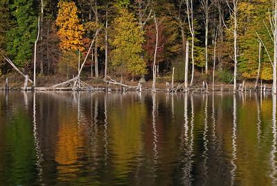 Fall Foliage - 2