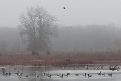 A Flight in the Fog