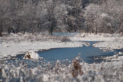 Snow in the Marsh