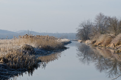 Frosty Morning in the Marsh