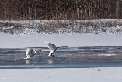 Winter Landing 2