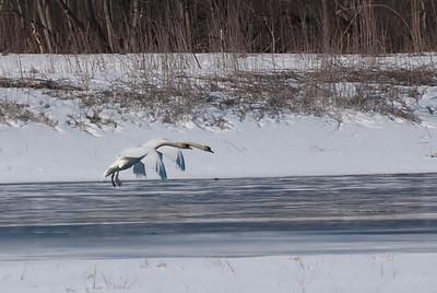 Winter Landing - 1