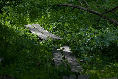 Wooden Walkway - 2
