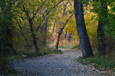 Walking Path Through the Autumn Forest