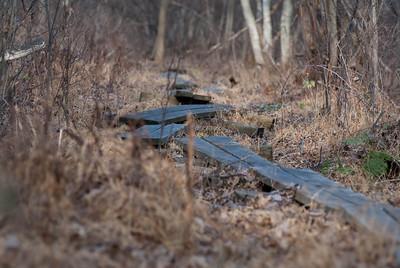 Wooden Walkway - 1
