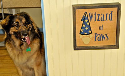 Wizard of Paws New Home