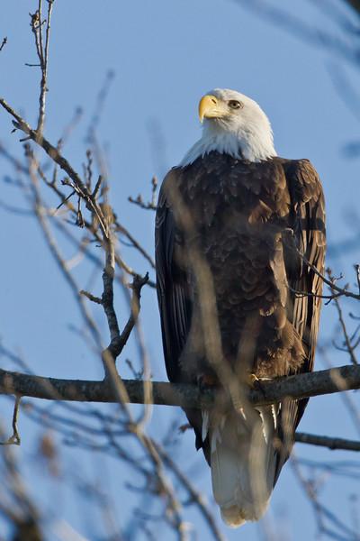 Wmsport Eagle '12 #1