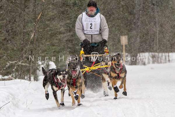 Wolf Track sled dog race 2016