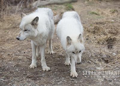 Argus (L) and Linnea (R)