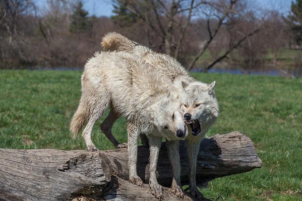 Wolfpark