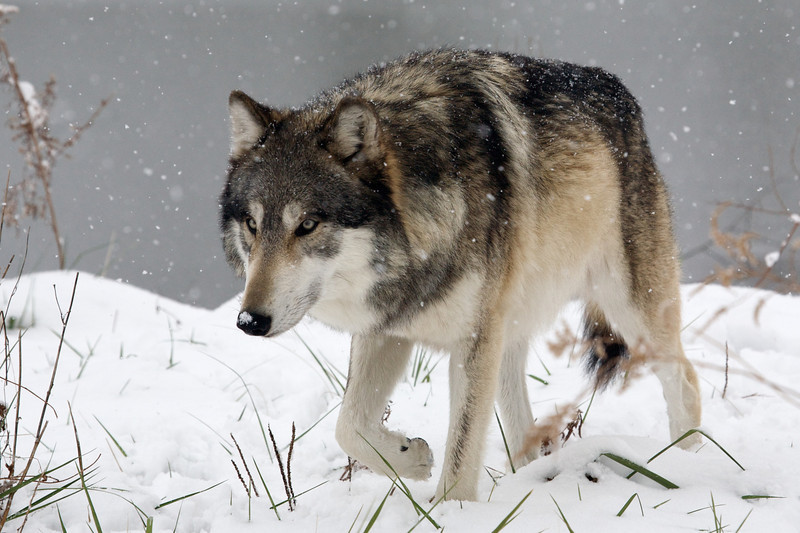 Wolfgang; December 4, 2010