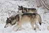 Wolfgang and Ruedi in the snow