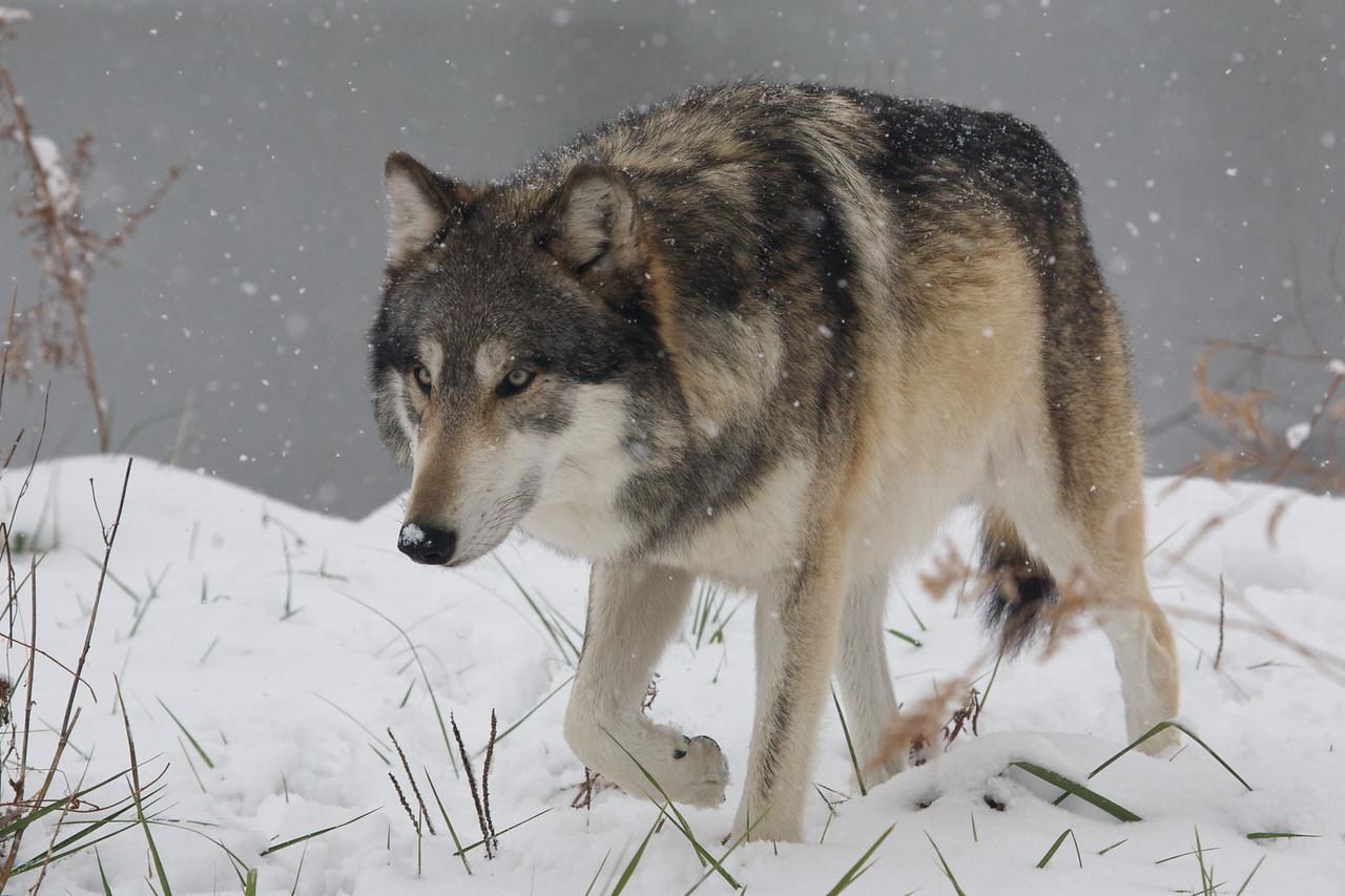 Wolfgang, December 2010