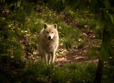 Wildlife-0443