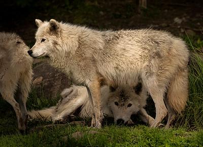 Wildlife-0513