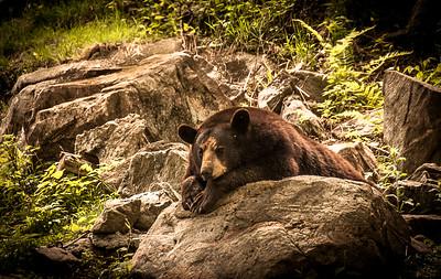 Wildlife-0584