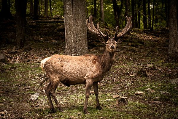Wildlife-0291