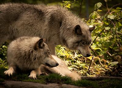 Wildlife-0178