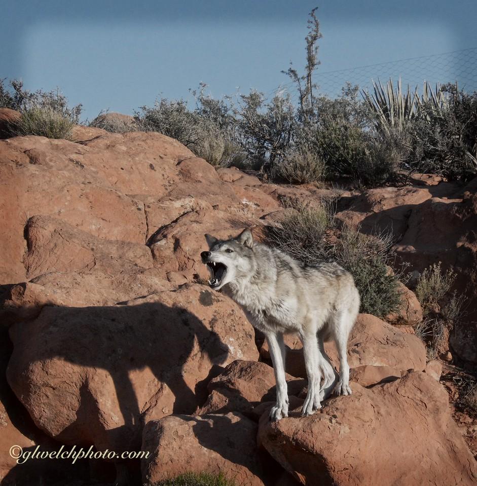 2015.4.13 Wolf part 2 203 (1) copy