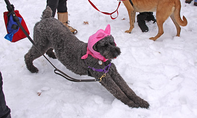 Womens March 2017 dog with hat IMG_1888