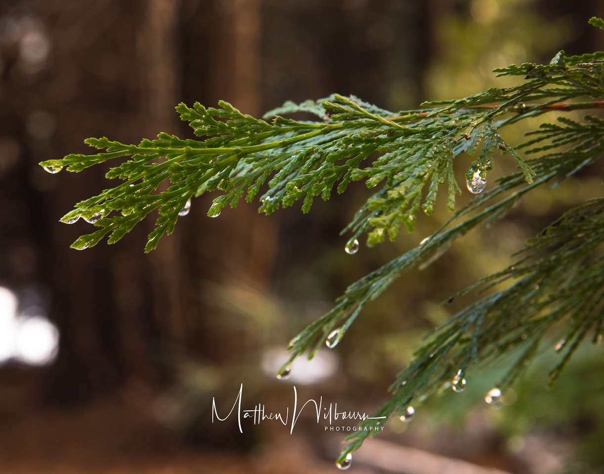 Water on Pine
