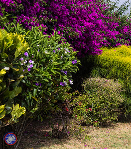 201601 - Panamanian Plants-4