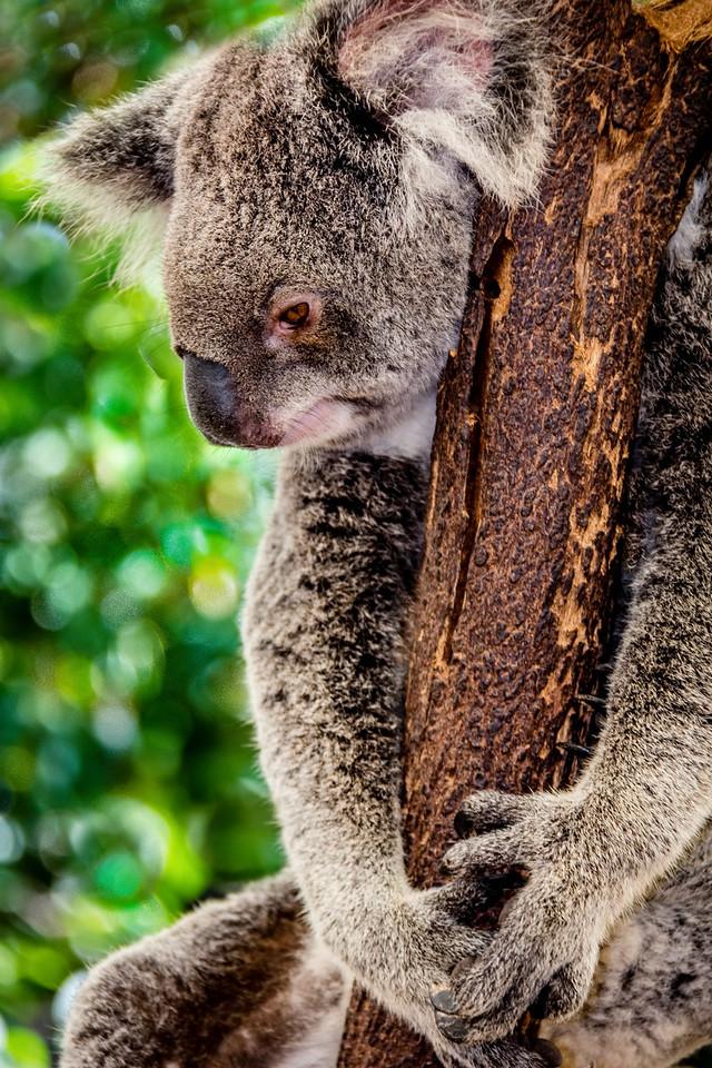 Brisbane, Australia