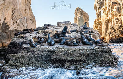 Sea Lion Colony - Cabo