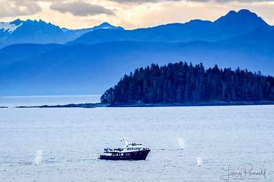 Whale Watching - Inside Passage