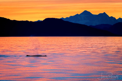 Lone Whale at Sunset