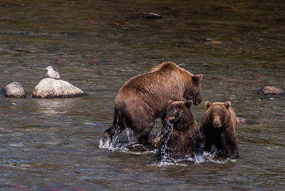 Sow Bear and Her Cubs