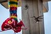 20180831-hummingbird-018