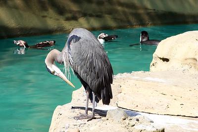 Crane - Woodland Park Zoo