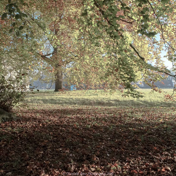 Lacock in November