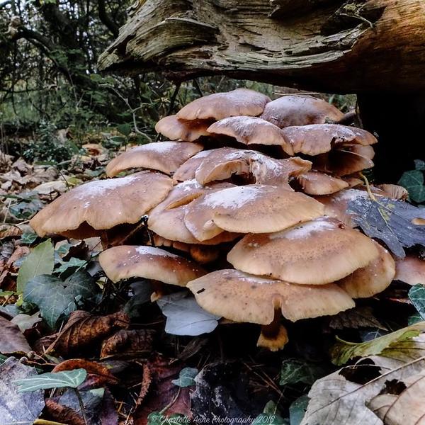 Fungi heaven.