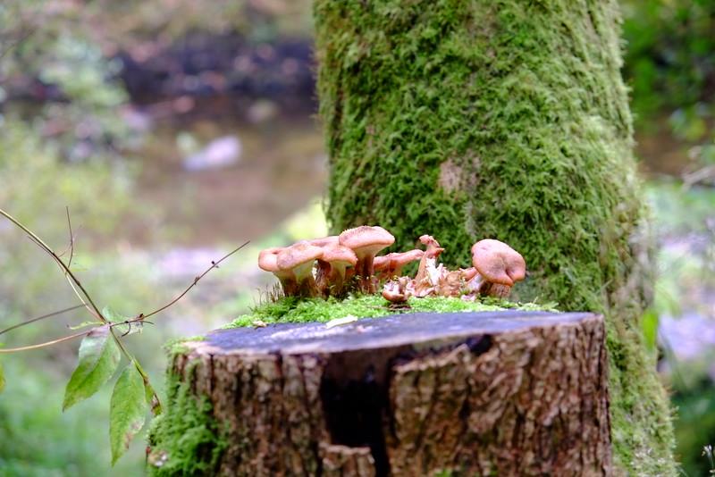 Mushroom in Wales