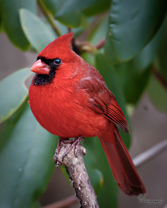 19-20 Backyard Birds