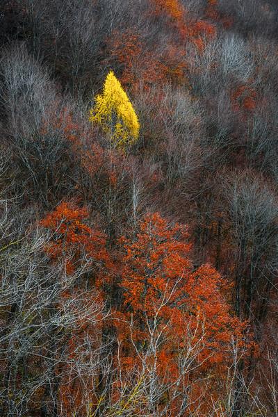 Last fall colours