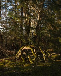 Billudden; GFX50S; GF45F2.8; Favorite; Portfolio; Landscape; Woodland; Spring; Unmanipulated